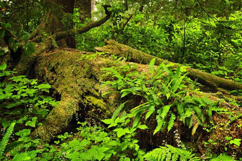 πολύβλαστο τροπικό δάσο&si στοκ φωτογραφίες