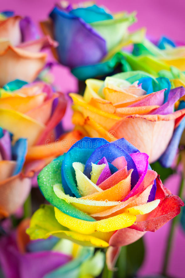 Πολύχρωμα τριαντάφυλλα στοκ εικόνα με δικαίωμα ελεύθερης χρήσης
