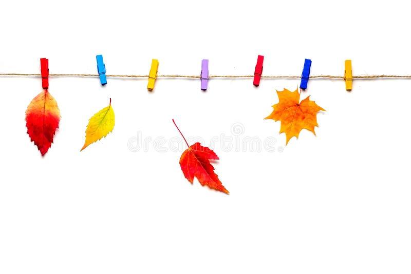 Πολύχρωμα φύλλα φθινοπώρου στα clothespins, που απομονώνονται στο άσπρο υπόβαθρο στοκ εικόνες με δικαίωμα ελεύθερης χρήσης