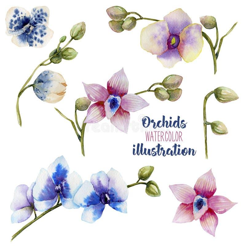 Πολύχρωμες ορχιδέες Watercolor της διαφορετικής συλλογής ποικιλιών απεικόνιση αποθεμάτων
