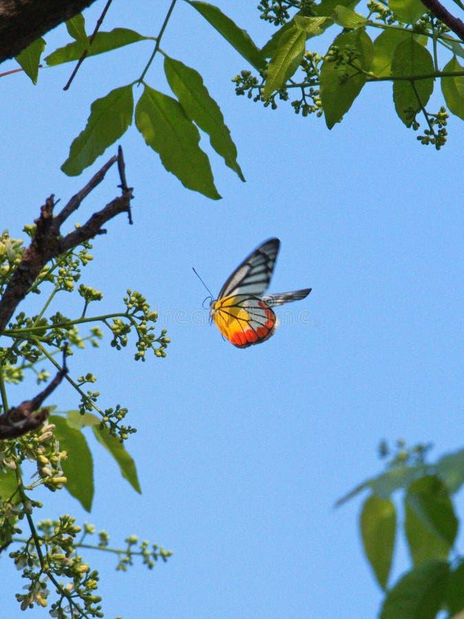 Πολύχρωμος τίτλος πεταλούδων για ένα άνθος δέντρων στοκ εικόνα με δικαίωμα ελεύθερης χρήσης