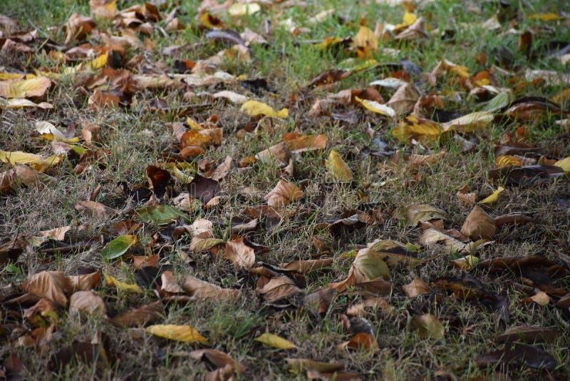 Πολύ συμπαθητικά ζωηρόχρωμα φύλλα φθινοπώρου στον κήπο μου στοκ φωτογραφία με δικαίωμα ελεύθερης χρήσης