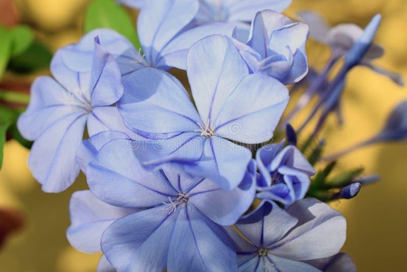 Πολύ συμπαθητικός στενός επάνω θερινών λουλουδιών στον κήπο μου στοκ εικόνα