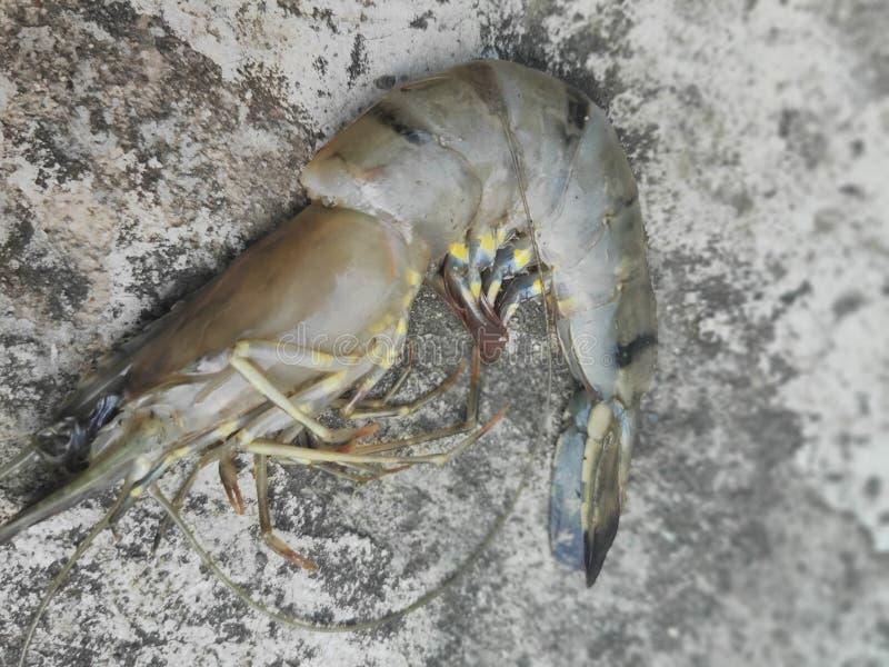 Πολύ φρέσκες γαρίδες τιγρών στοκ εικόνες