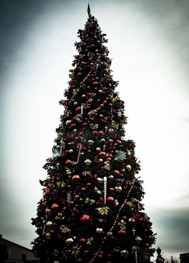 Πολύ ψηλό χριστουγεννιάτικο δέντρο στοκ εικόνα με δικαίωμα ελεύθερης χρήσης