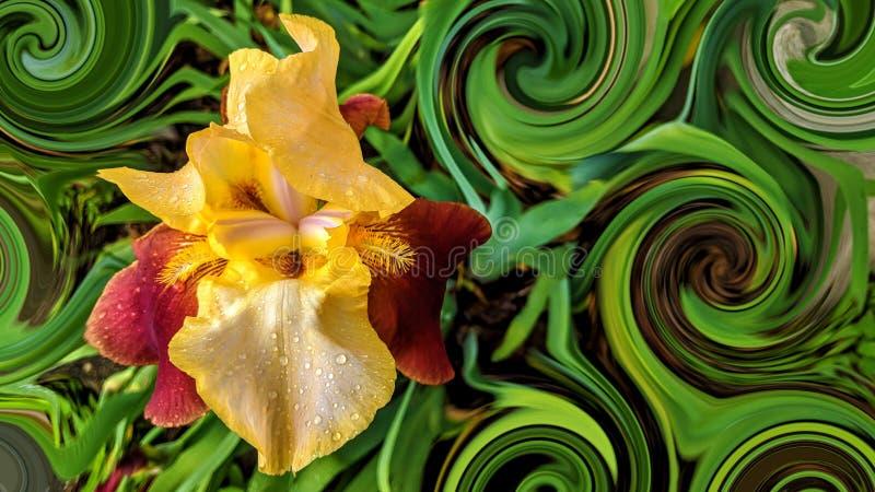 πολύ όμορφα κόκκινα και κίτρινα χρωματισμένα λουλούδια με τις πτώσεις του νερού στοκ φωτογραφία με δικαίωμα ελεύθερης χρήσης