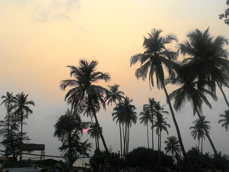 Πολύ όμορφο ηλιοβασίλεμα πέρα από τον Ινδικό Ωκεανό, με τους φοίνικες σε Goa στοκ εικόνα