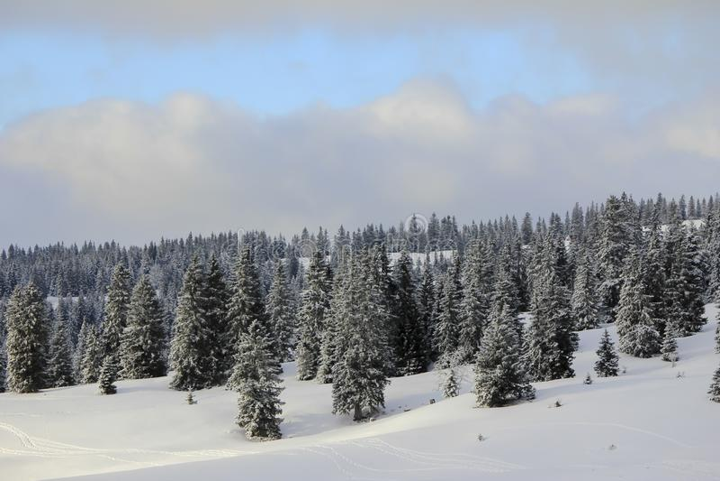 Πολύ όμορφο χειμερινό τοπίο με ρυάκια στοκ εικόνες