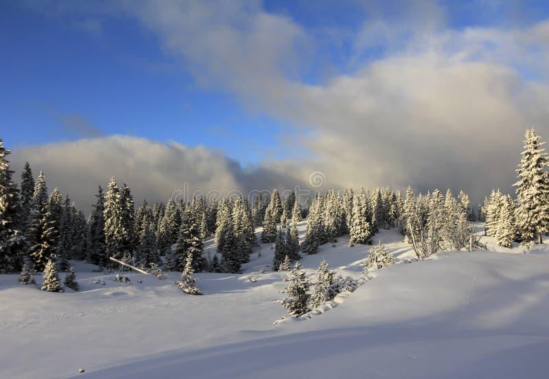 Πολύ όμορφο χειμερινό τοπίο με ρυάκια στοκ φωτογραφίες με δικαίωμα ελεύθερης χρήσης
