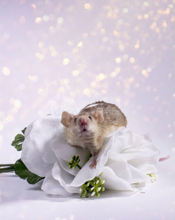 Ποντίκια λουλουδιών στοκ εικόνα