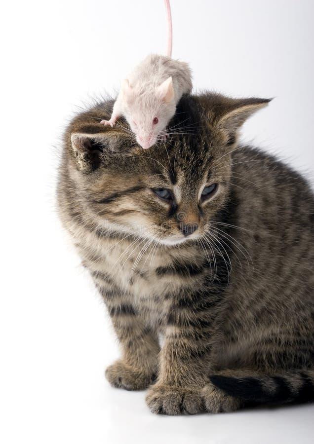 ποντίκι γατών στοκ φωτογραφίες με δικαίωμα ελεύθερης χρήσης