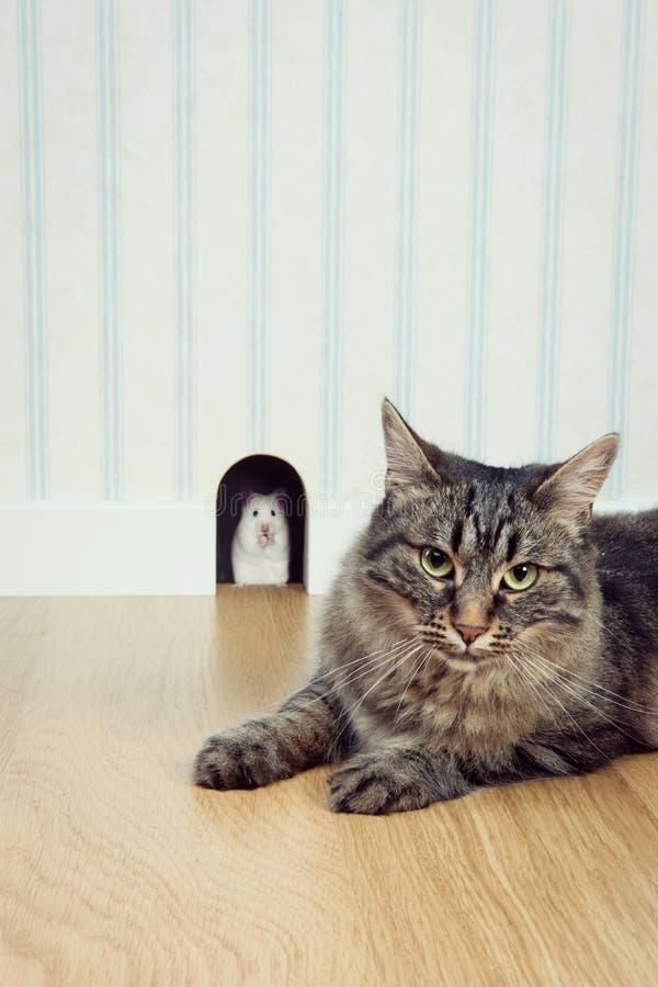 Ποντίκι στην τρύπα και γάτα στοκ εικόνα με δικαίωμα ελεύθερης χρήσης