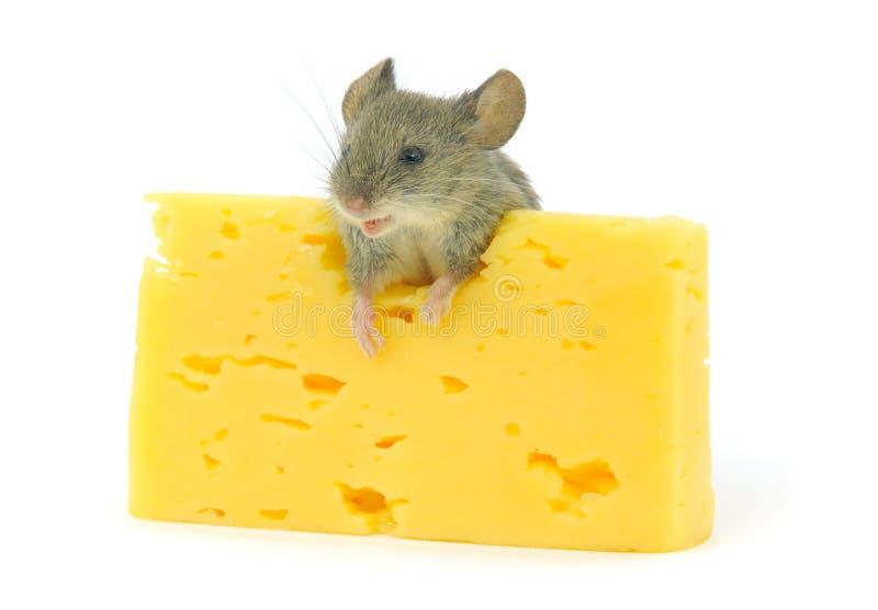 ποντίκι τυριών στοκ εικόνα με δικαίωμα ελεύθερης χρήσης