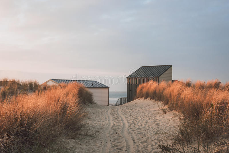 Πορεία αμμόλοφων στην παραλία στοκ εικόνες