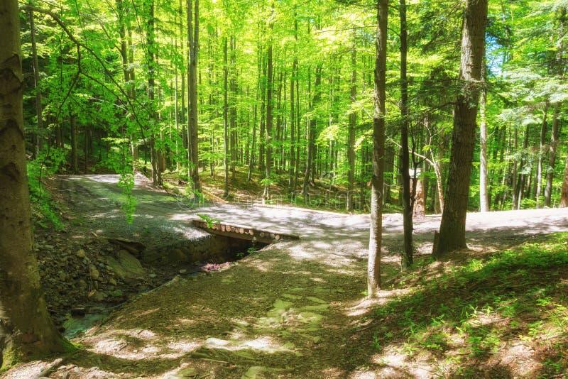 Πορεία βουνών στην πυκνή πράσινη δασική πορεία πέρα από το μικρό ρεύμα στο φως του ήλιου στοκ εικόνες με δικαίωμα ελεύθερης χρήσης