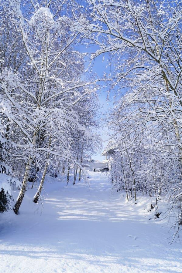 Πορεία διαδρόμων των χιονωδών δέντρων Μια φωτογραφία στοκ φωτογραφίες