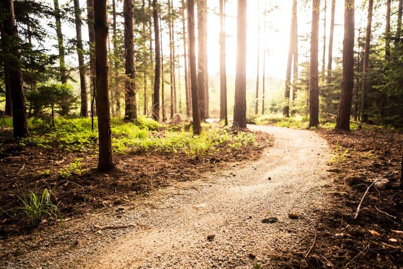 Πορεία και ηλιοβασίλεμα πεζοπορίας στα όμορφα ξύλα στοκ φωτογραφία