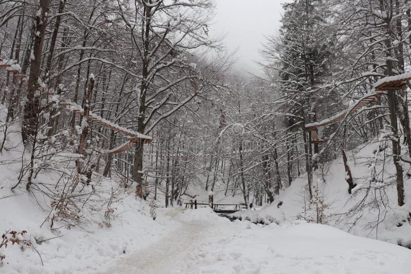 Πορεία κατά μήκος του δάσους χειμερινού χιονιού στοκ φωτογραφίες