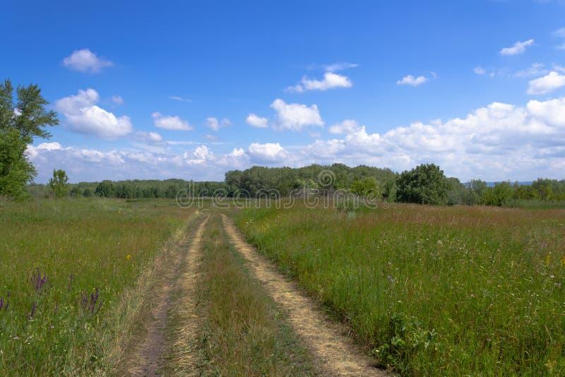 Πορεία μέσω ενός τομέα με την παχιά χλόη στοκ εικόνες