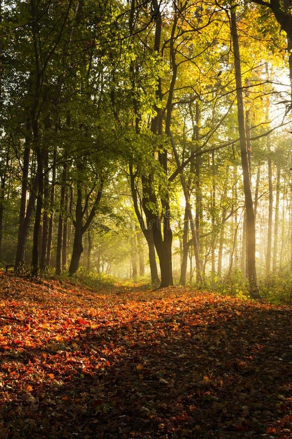 Πορεία μέσω του δάσους με το δευτερεύον φως πρωινού στοκ φωτογραφίες
