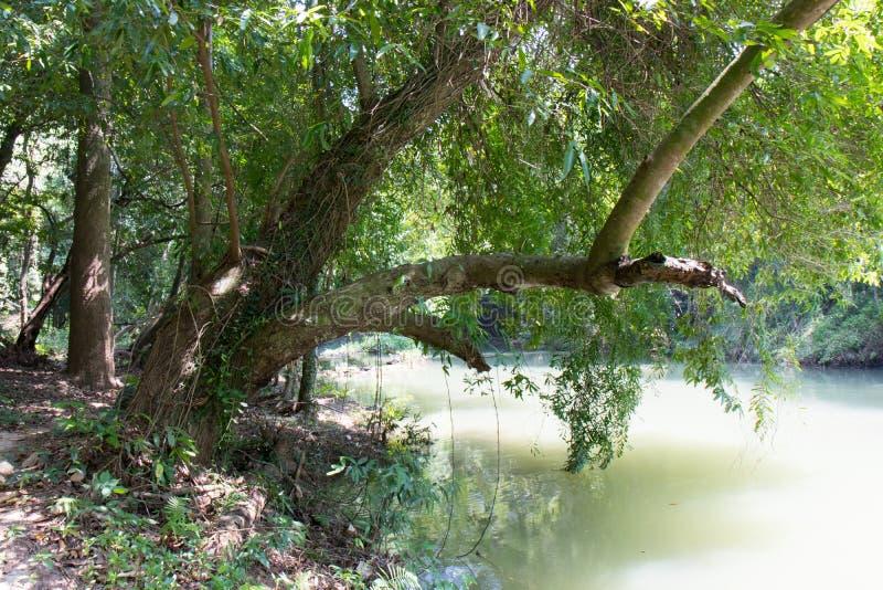 Πορεία μέσω του δάσους και κατά μήκος του ποταμού στοκ φωτογραφία με δικαίωμα ελεύθερης χρήσης