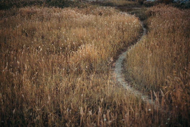 Πορεία μέσω του τομέα φθινοπώρου με την κιτρινισμένη χλόη στοκ εικόνα