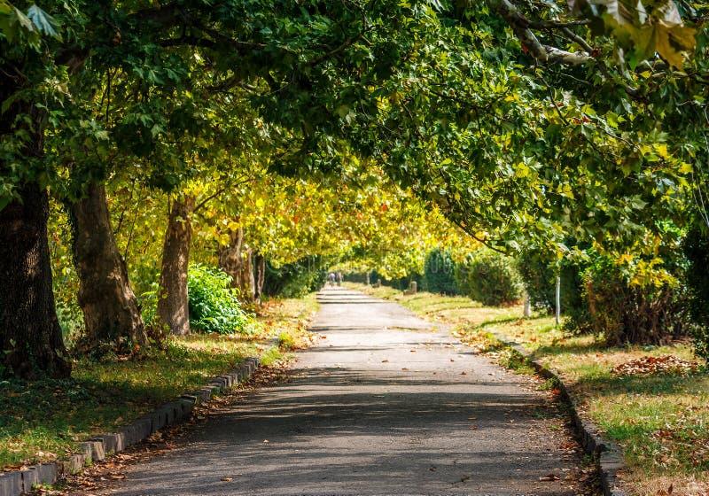 Πορεία μεταξύ των δέντρων στο πάρκο στοκ φωτογραφία με δικαίωμα ελεύθερης χρήσης