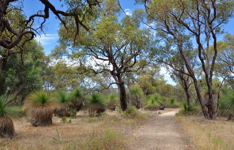Πορεία μεταξύ των δέντρων Yakka στοκ φωτογραφία με δικαίωμα ελεύθερης χρήσης