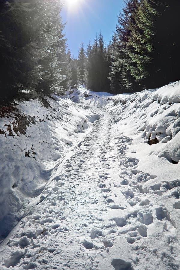 Πορεία με τα ίχνη στο χιονώδες δάσος στοκ φωτογραφία