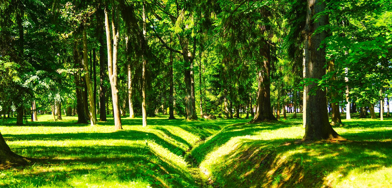 Πορεία παρόδων διάβασης πεζών με τα πράσινα δέντρα στη δασική όμορφη αλέα, δρόμος στο πάρκο στοκ φωτογραφία με δικαίωμα ελεύθερης χρήσης