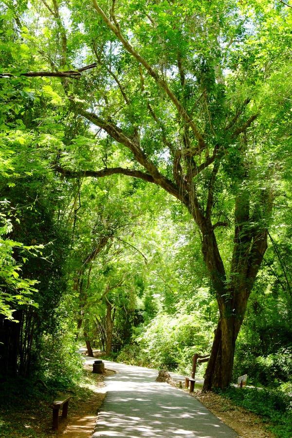 Πορεία παρόδων διάβασης πεζών με τα πράσινα δέντρα στοκ εικόνες