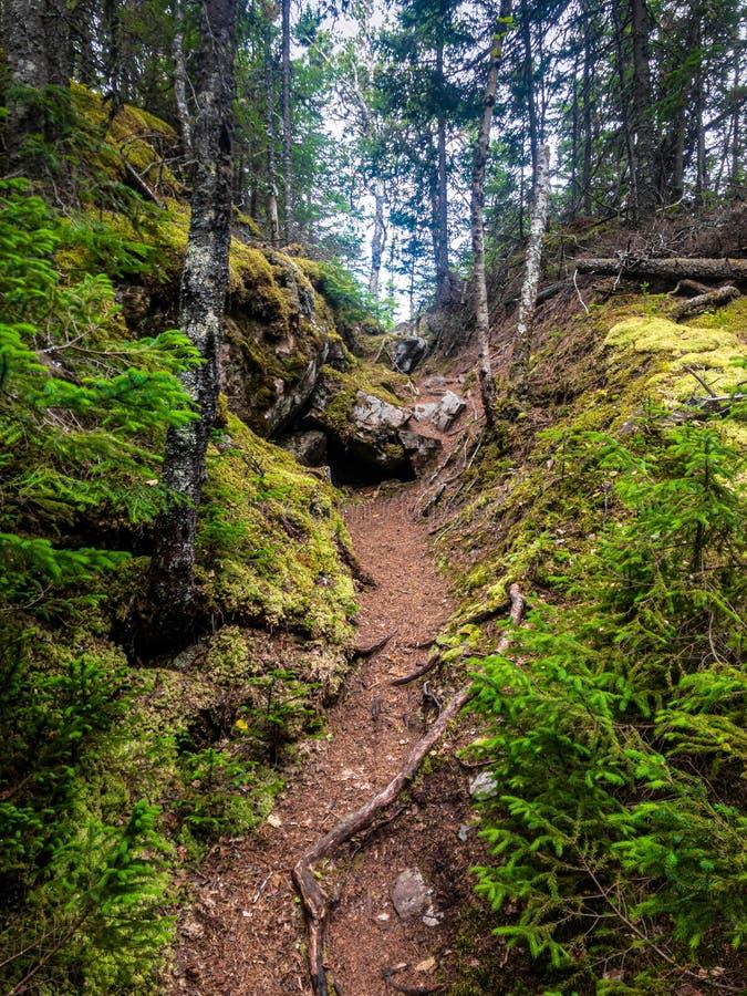 Πορεία πεζοπορίας στο δάσος στοκ εικόνες