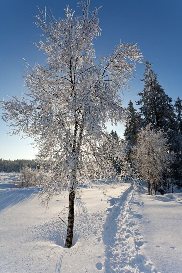 Πορεία πεζοπορίας τοπίων χειμερινού χιονιού, υψηλοί βάλτοι, Βέλγιο στοκ φωτογραφίες