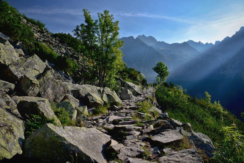 Πορεία πετρών βουνών στο δασικό υψηλό βουνό tatra στοκ φωτογραφία