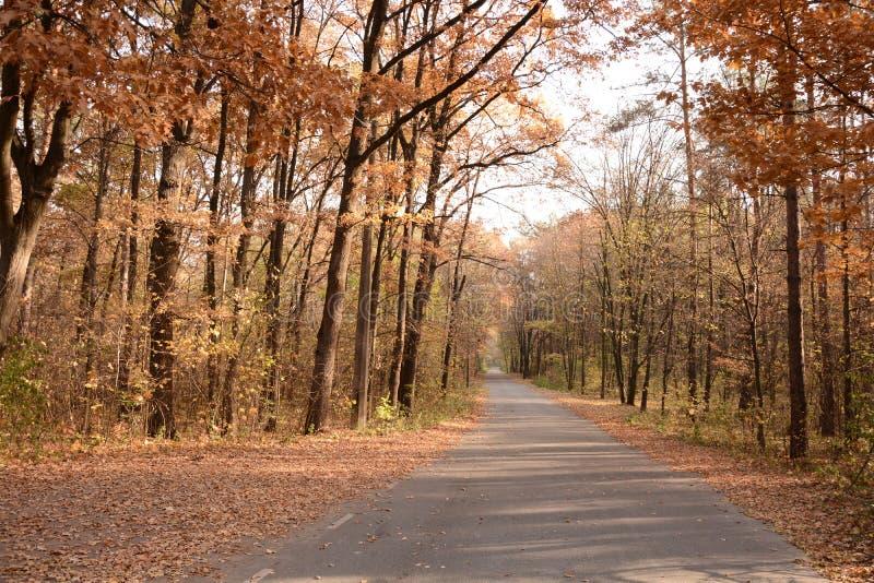 Πορεία ποδηλάτων στο πάρκο φθινοπώρου στοκ εικόνα