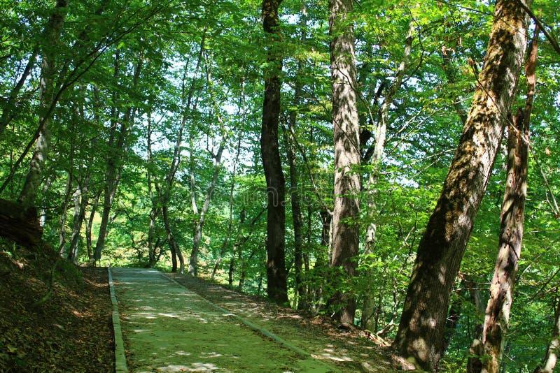 Πορεία προς το δάσος στοκ εικόνα με δικαίωμα ελεύθερης χρήσης