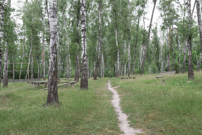 Πορεία σε ένα άλσος σημύδων Πάγκοι στο δάσος στοκ φωτογραφίες με δικαίωμα ελεύθερης χρήσης