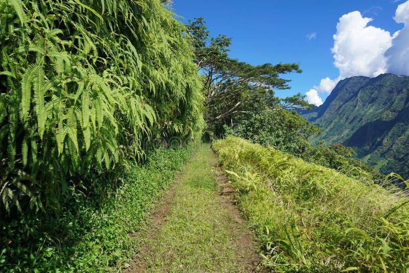 Πορεία στα βουνά του νησιού της Ταϊτή στοκ εικόνες