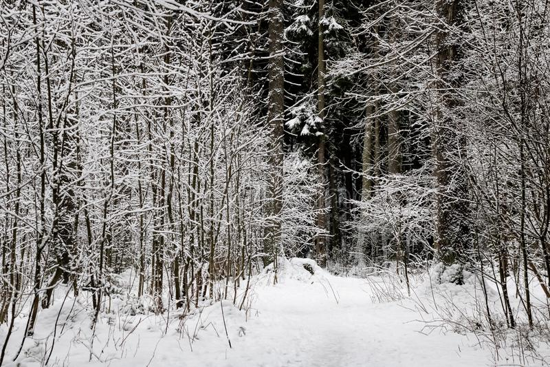 Πορεία στα ξύλα μεταξύ των κλάδων με το χιόνι στοκ φωτογραφία