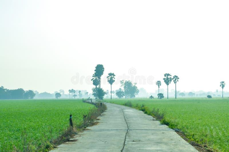 Πορεία στον τομέα ορυζώνα με το φοίνικα ζάχαρης στην υδρονέφωση στοκ εικόνες με δικαίωμα ελεύθερης χρήσης