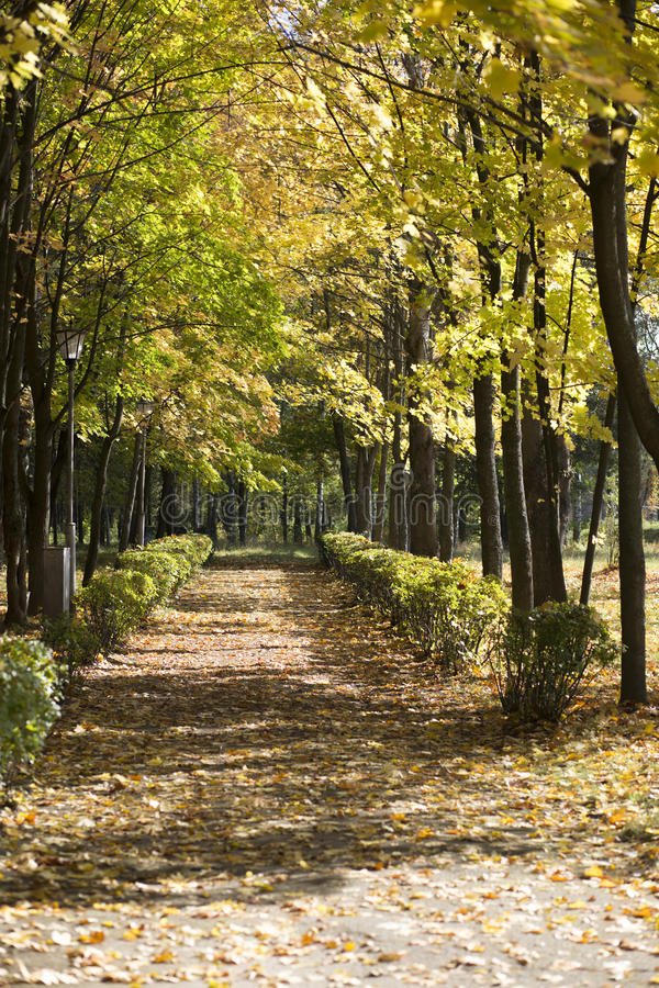 Πορεία στο δάσος στοκ φωτογραφία