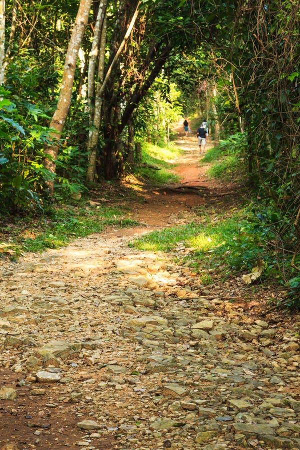 Πορεία στο δάσος στοκ εικόνες με δικαίωμα ελεύθερης χρήσης
