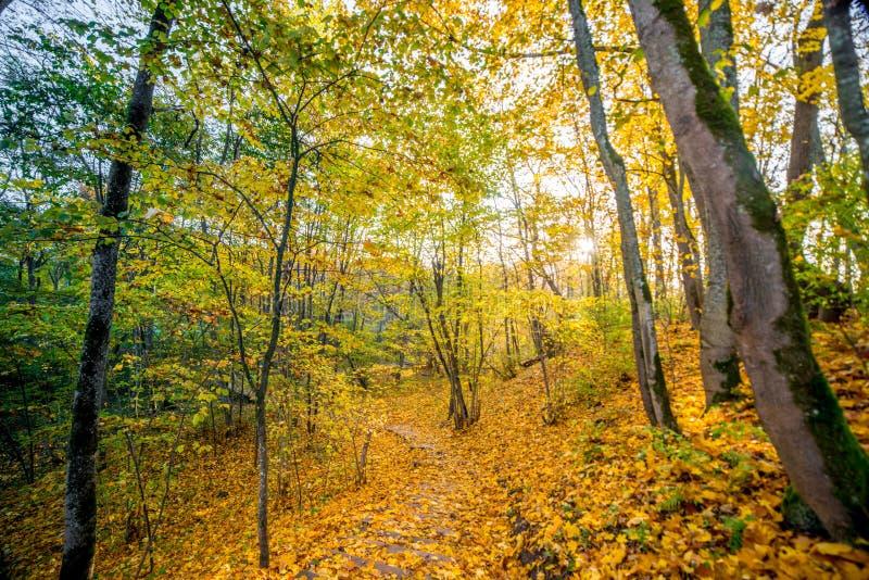 πορεία στο δάσος πτώσης στοκ φωτογραφίες