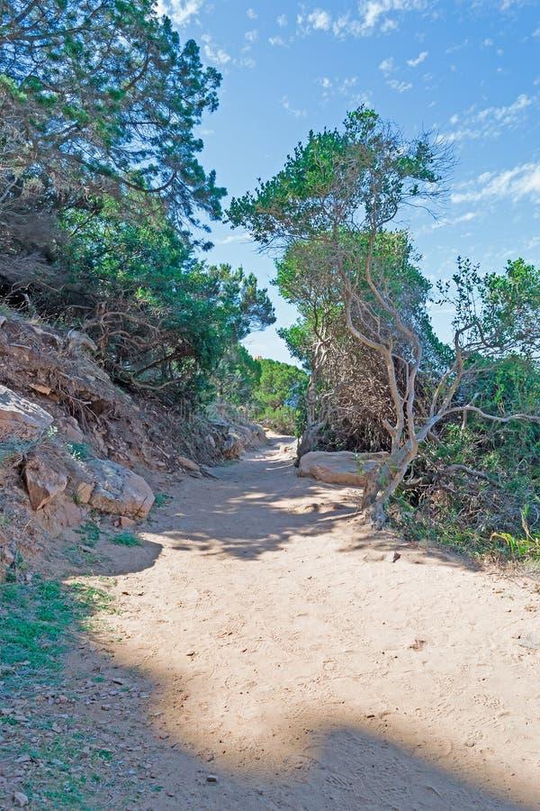 Πορεία στο πάρκο στοκ εικόνα