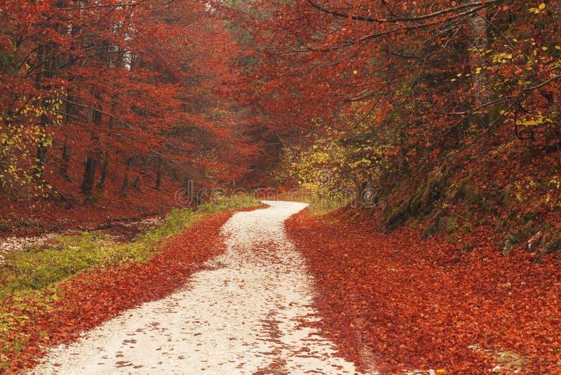 Πορεία φύσης μέσω των κόκκινων φύλλων στοκ εικόνα