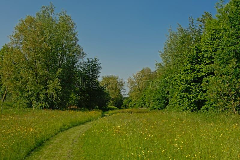 Πορεία χλόης μέσω ενός ηλιόλουστου λιβαδιού με τα κίτρινα wildflowers με το πολύβλαστο πράσινο δάσος πίσω στοκ εικόνα με δικαίωμα ελεύθερης χρήσης