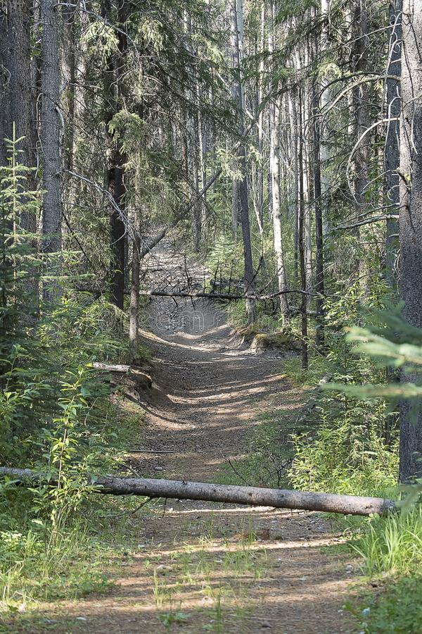 Πορεία Banff στοκ φωτογραφία
