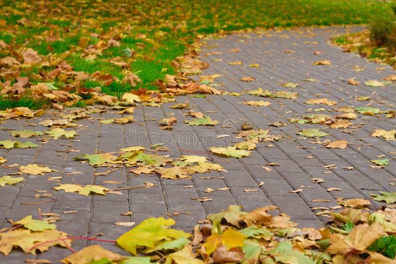 Πορείες πάρκων και πράσινη χλόη γύρω από καλυμμένος με τα πεσμένα φύλλα στοκ εικόνες με δικαίωμα ελεύθερης χρήσης