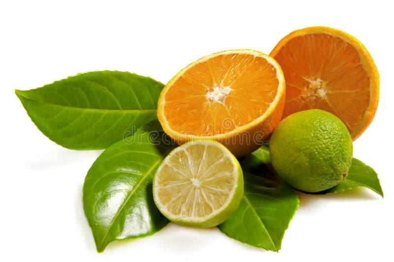 πορτοκάλι ασβέστη στοκ φωτογραφία