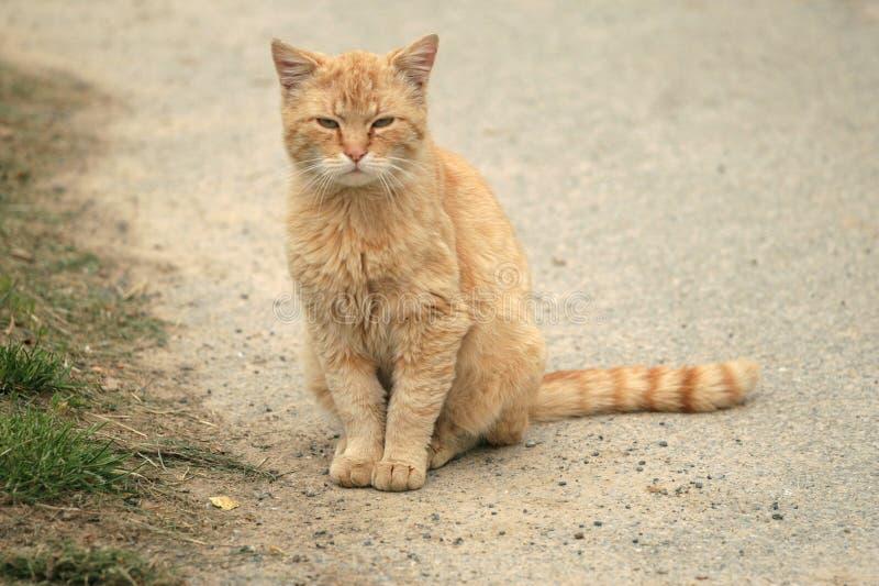 πορτοκάλι γατών Στοκ εικόνες με δικαίωμα ελεύθερης χρήσης